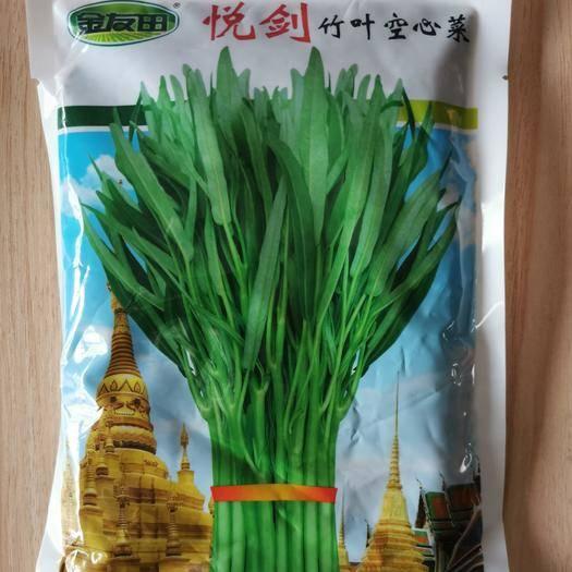 温州文成县 竹叶空心菜种子悦剑青梗竹叶连续采收卖相好叶片细长