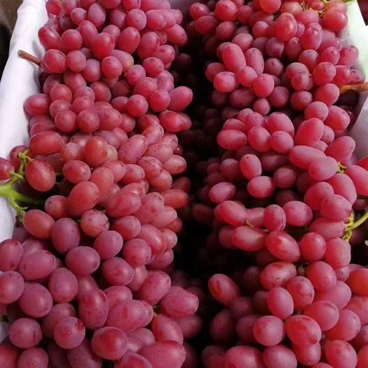 蓬莱市 精品克瑞森葡萄一二三级