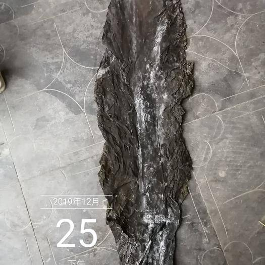 荣成市 2019年大板海带 90公分长 修边去尾 无沙无杂质全国发货