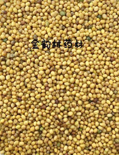 安國市 黃芥子 產地貨源平價直銷無硫 無土無雜 代打粉袋裝包郵