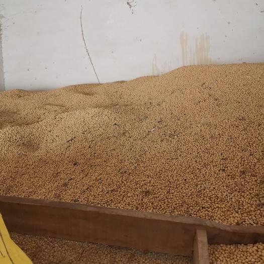 滁州明光市有机黄豆 黄豆中籽加工豆腐优选品种