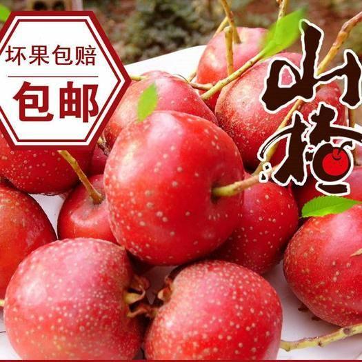 潍坊临朐县 新鲜山楂果水果山楂特级农家自种现摘现发宝宝水果酸甜山楂糖葫