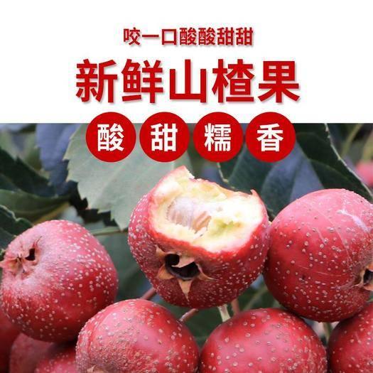 潍坊临朐县 精品超新鲜大山楂果自家果园现摘现发老少皆宜开胃水果酸甜可口