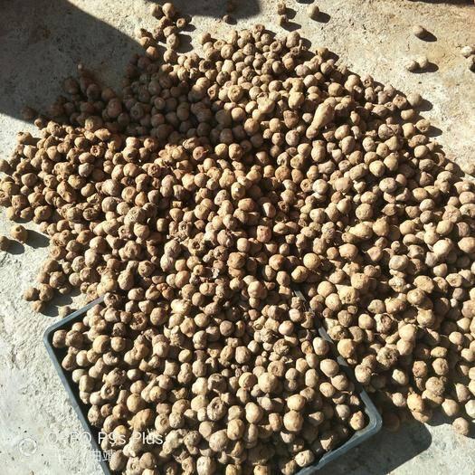 曲靖富源县 5到20克左右花魔芋种子