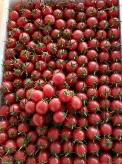 茂名電白區 現在的圣女果甜度已經達到10個點以上了,貨很漂亮,價格美麗