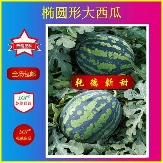 潍坊寿光市西瓜种子 乾德新甜 口感脆甜,耐裂不易炸瓜