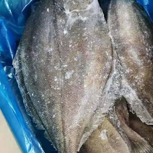 济南 比目鱼(季节性特价)