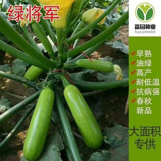 寿光市 绿将军西葫芦种子 早春抗寒抗病毒高产角瓜籽