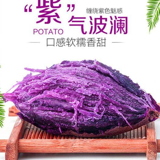 莒南縣 紫薯批發通貨1.8一斤 山東紫薯臨沂紫薯小果中果大果紫薯
