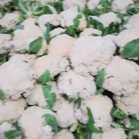 天门市白花菜 财源源滚滚滚财喜四面八方。大市花菜上市了。欢迎您的伞购。