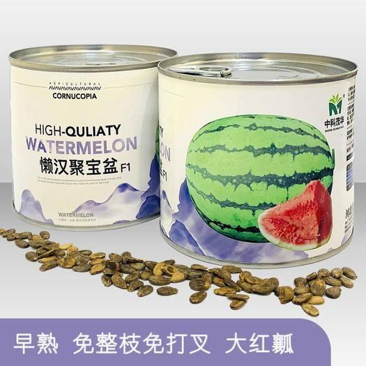 商丘夏邑县 懒汉聚宝盆西瓜种子,免整枝打叉,单瓜15-30斤,大红瓤