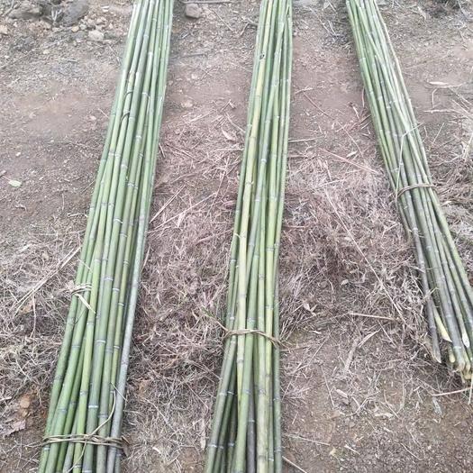 嘉禾县 迎着冬风砍麻竹,根根笔直好样子!