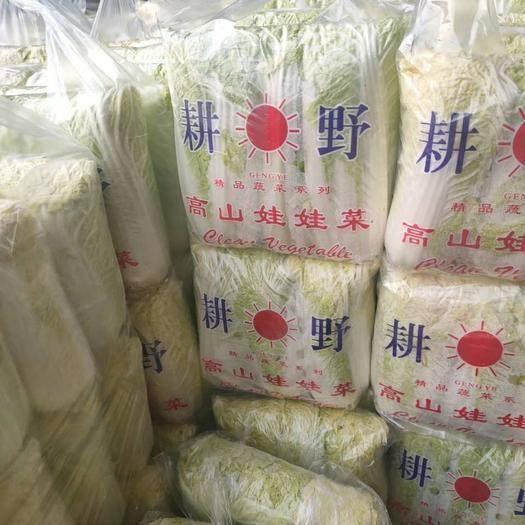 邯郸永年区 精品娃娃菜大量上市中!