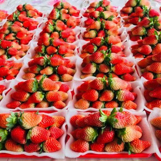 德昌縣 大涼山冬草莓市場電商供應一件代發