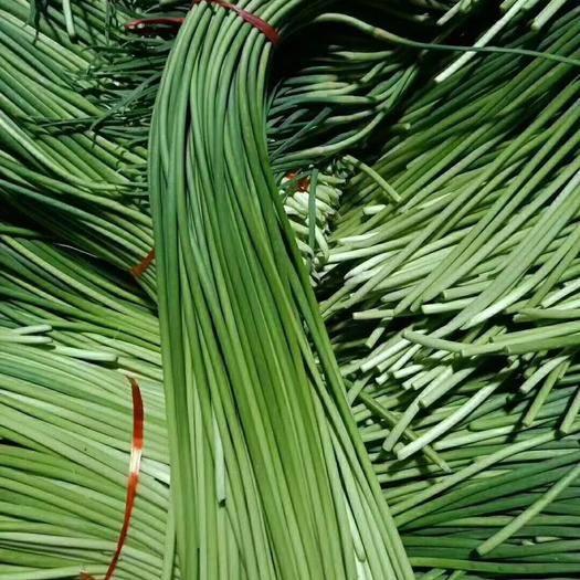 濟寧金鄉縣紅帽蒜薹 金鄉優質蒜薹  大量供應   各質量都有