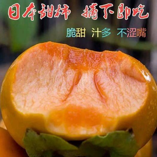 临沂平邑县甜脆柿子苗 日本脆甜柿子苗 柿子苗 嫁接柿子苗 基地直发 包成活