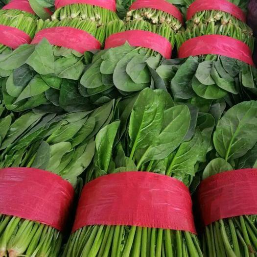 滨州惠民县 万亩菠菜种植基地,质优价廉,保质保量!