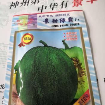 景甜绿霸甜瓜种子 绿宝升级换代品种