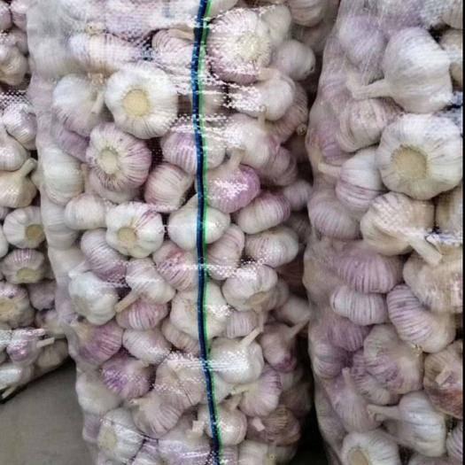 济宁金乡县 常年供应金乡大蒜5-7公分 个头均匀皮色好 代发全国