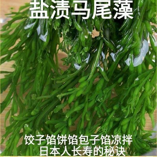 迁安市 盐渍马尾藻日本人长寿的秘诀常吃海洋中的食物5斤装包邮