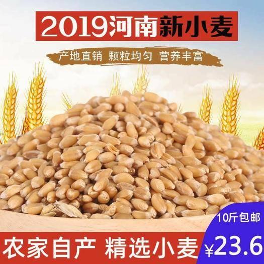 沈丘縣 2019干麥子帶皮農家小麥粒散裝做麥芽糖小麥種子發芽榨汁磨