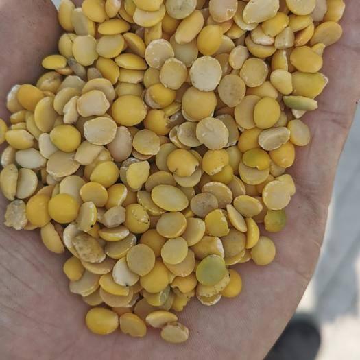 济宁鱼台县 常年加工各种色选脱皮豆瓣 黑豆瓣 青豆瓣 黄豆瓣