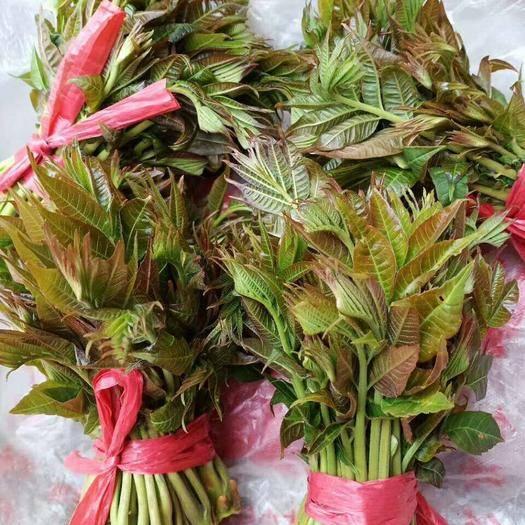 渭南华州区绿香椿芽 自家种植,CCTV-舌尖上的美食,美味,营养价值极高。