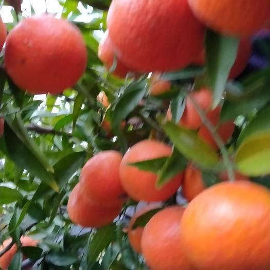 新干縣有林地 家庭農場出租,緊臨105國道,水電路全通,設施齊全。