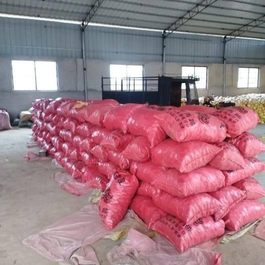 恭城瑶族自治县 供应大量马蹄,皮红肉嫩,清甜可口,欢迎新老客户光临采果