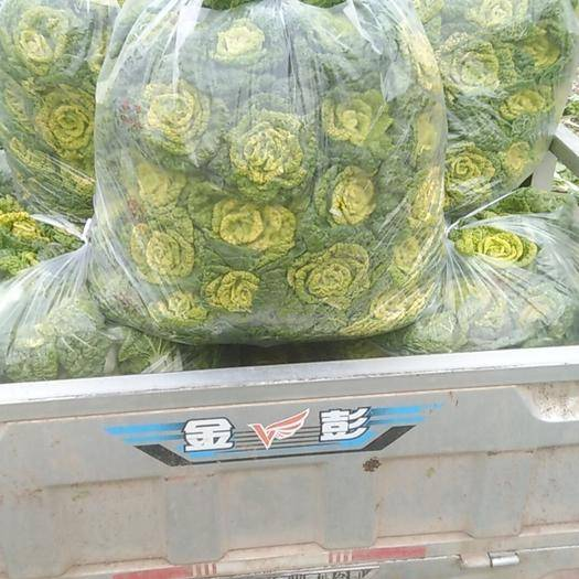 蚌埠怀远县 供应优质大棚黄心菜