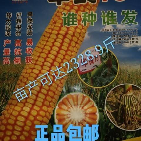 泰安肥城市 高產玉米種子!華良78誰種誰發!