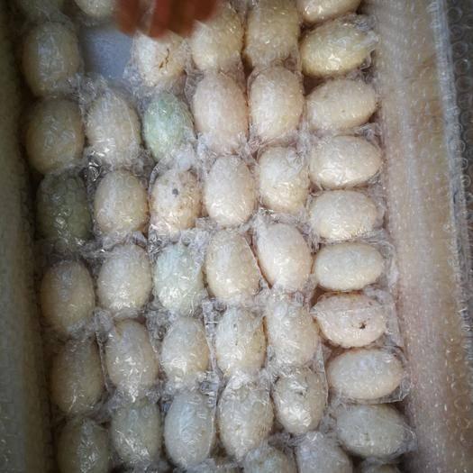 德陽中江縣 養殖場直發 父母代 受精鴨蛋—(一點花)體重可達6-7斤