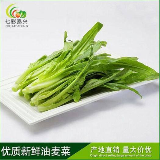 大理宾川县油麦菜 七彩泰兴 蔬菜 基地直销 新鲜绿色 西餐蔬菜 高原特色农产品