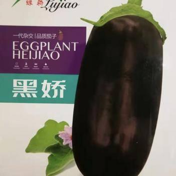 茄子种子 供应大果型绿萼黑长茄种子