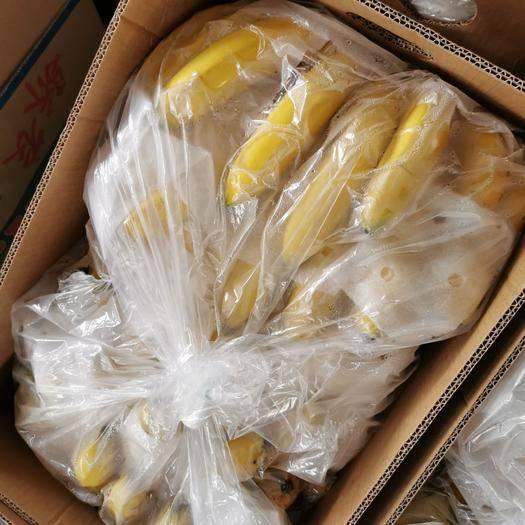 重庆 菲律宾香蕉