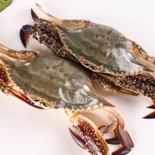 南京梭子蟹 10斤/箱6-9两/只顺丰包邮!鲜活速冻大螃蟹冰冻特大梭