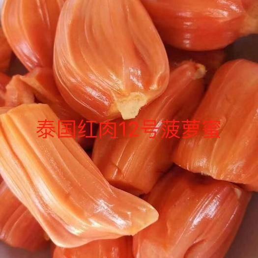 钦州灵山县 泰国12号红肉菠萝蜜苗,品种正宗,带营养杯发货