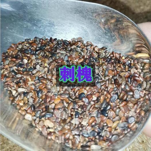 宿迁沭阳县 护坡草种子灌木护坡种子新种了包邮