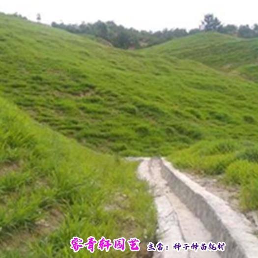 郑州二七区 优质护坡草种子防止水土流失草坪灌木护坡种子包邮