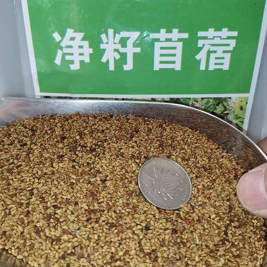 宿迁沭阳县 苜蓿草种子紫花苜蓿草种子
