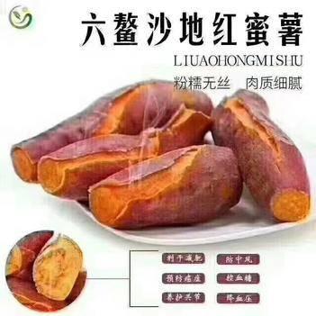 六鳌地瓜  福建漳州 红薯  产地直销  欢迎电商  微商来对接