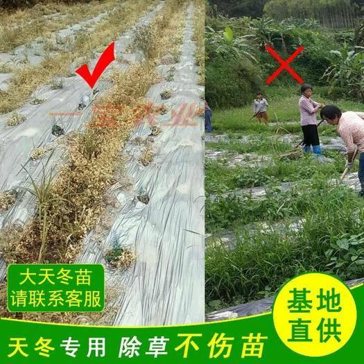 信宜市 天冬除草劑安全高效除草禾本闊葉滅草藥黃精百部中藥材除草劑