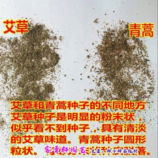 郑州二七区 艾草种子香艾种子 艾蒿种子散称包邮