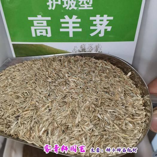 郑州二七区 高羊茅种子高羊毛种子新种子包邮