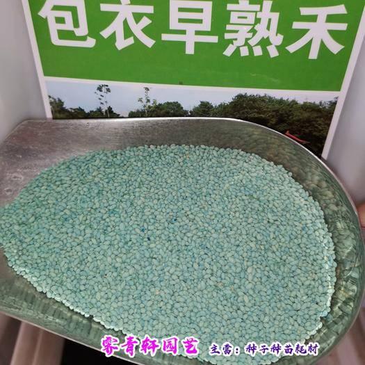 郑州二七区 早熟禾种子小鸡草种子冷草种子新种子大量出售(包邮)