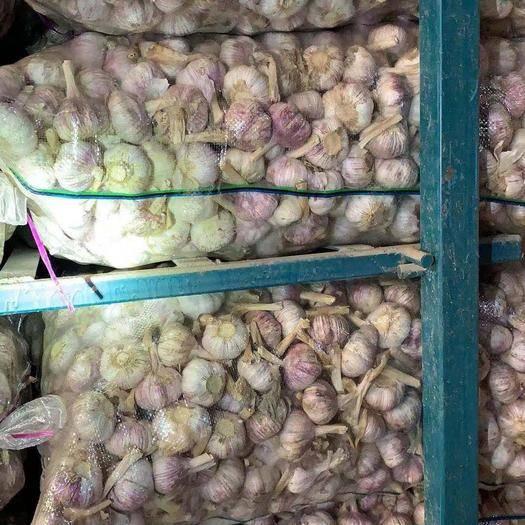 金鄉縣 富森蒜業  專注大蒜  儲存加工 全國供應