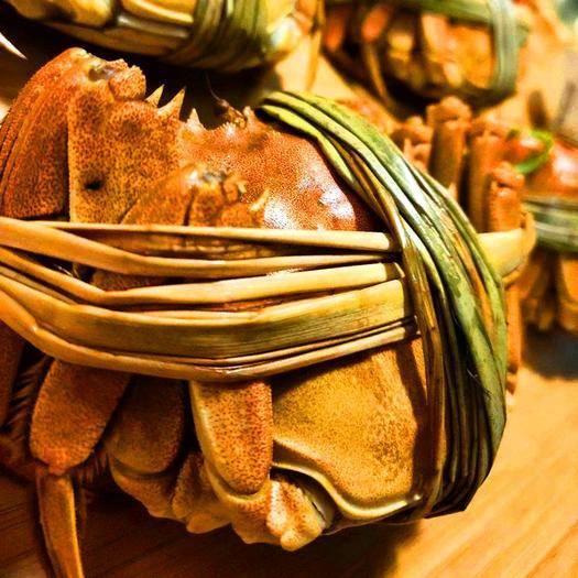 兴化市 江苏大闸蟹精品残蟹,量大优惠,品质好,精品大闸蟹