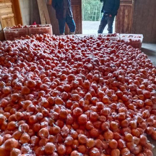 湘西保靖县椪柑 优质碰柑脐橙,果大皮薄口感甜基地直发