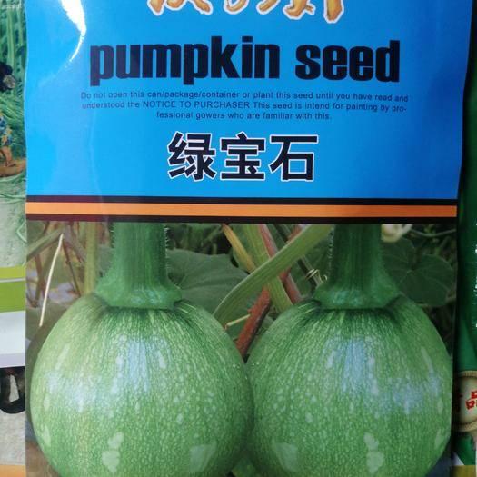 凉山西昌市 杂交一代嫩食南瓜种子,色泽绿亮,脆甜,中早熟,坐果率高