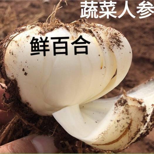 唐山遷安市 鮮百合蔬菜人參美味營養可吃可當種子一斤包郵